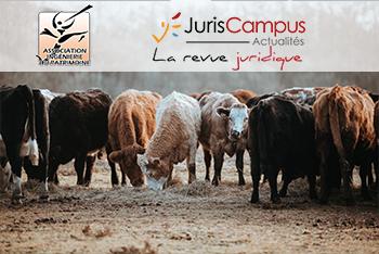 #m2ip – Groupe recherche – L'investissement dans un cheptel de vaches